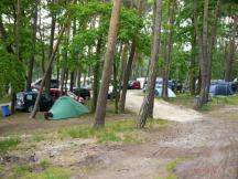 místa pro stany v borovém lese
