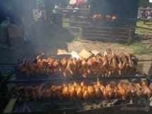 naše kuřátka